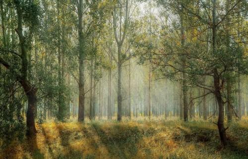 Mežu sertifikācijas padome: Latvijā mežsaimniecība ir ļoti labā līmenī