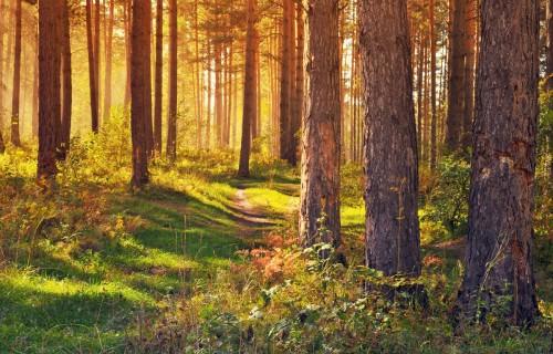 Kāds ir šodienas mežs?