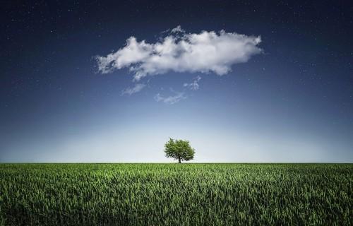 Augu aizsardzības līdzekļu ietekme uz vidi un dzīvajiem organismiem
