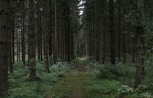 Augustā notiks divi semināri meža īpašniekiem par meža apsaimniekošanu un ar to saistītajiem jautājumiem