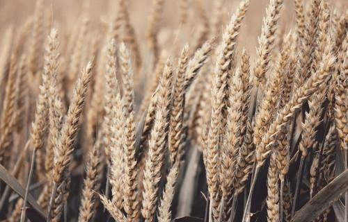 Latvijas Zemes fonds sešos gados lauksaimniekiem iznomājis vairāk nekā tūkstoti īpašumu 21,3 tūkstošu ha platībā