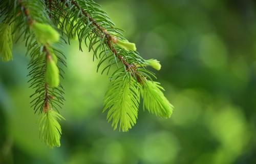 Latvijā šogad atjaunoti 22 400 hektāru meža