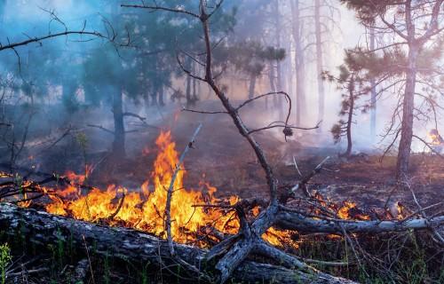 Kā pasargāt savu mežu no ugunsnelaimes