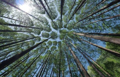 Cer radīt oglekļa kalkulatoru mežsaimniecībā