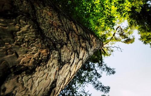 Meža produktu imports šogad palielinājies par 48,3%
