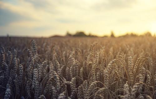 Plānotie grozījumi Lauksaimniecības un lauku attīstības likumā ļaus izveidot un uzturēt vienotu sistēmu Latvijas LIZ datu uzkrāšanai un atjaunošanai