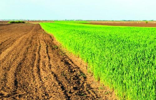 Kas jāzina par augu aizsardzību, sākoties sezonai