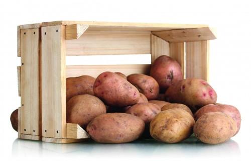 Bioloģiskajai audzēšanai perspektīvu kartupeļu šķirņu salīdzinājums