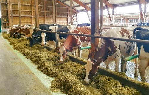 Ilgtspējīgas lauksaimniecības pieredze Šveicē