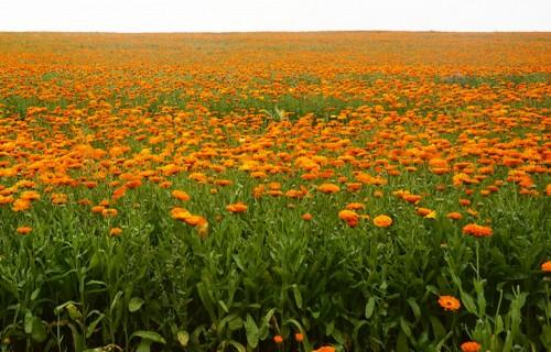 Kas ir bioekonomika un kā to pielietot lauksaimniecībā