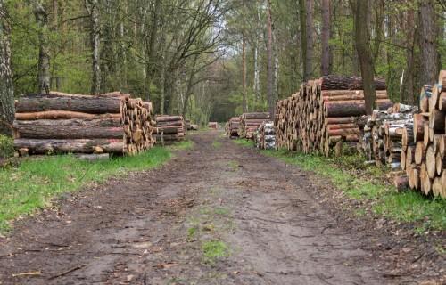 Pilnveidota mežam nodarīto zaudējumu noteikšana un aprēķināšana