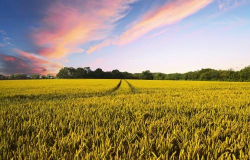 Ministrs Kaspars Gerhards: vides un klimata prasības nedrīkst kavēt lauksaimnieku un lauku apvidu attīstību