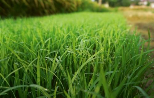Augu barības elementu bilance –  tās iespējamais pielietojums modernajā lauksaimniecībā