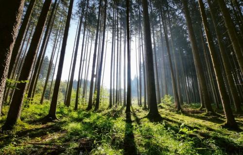 Laiks atjaunot meža inventarizāciju!