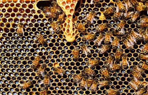 """Februārī notiks """"VI Starptautiskā Latgales biškopju konference"""""""