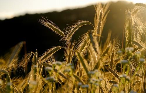 Jaunais augsnes izpētes projekts palīdzēs gudrāk izmantot lauksaimniecības zemi