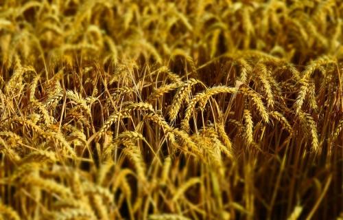 """Konference """"Latvijas produktu tirgus spēks pārtikas ķēdēs"""""""