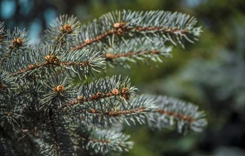 Aktualizēts meža kokaudzētavu saraksts 2021