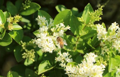 Vīrusu un bišu valstībā