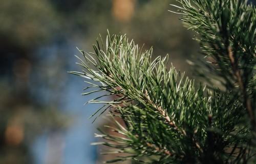 """AS """"Latvijas valsts meži"""" uzsāk meža atjaunošanas sezonu"""
