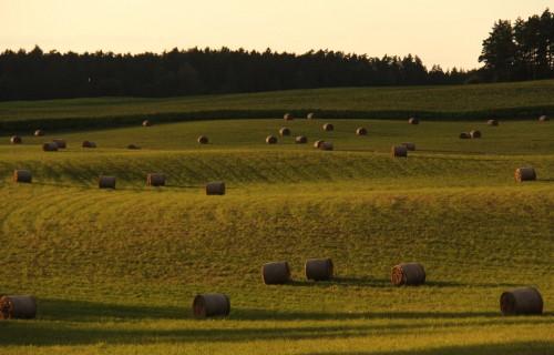 Arī šogad lauksaimniekiem pieejams 12 miljonu eiro valsts atbalsts daļējai kredītprocentu dzēšanai