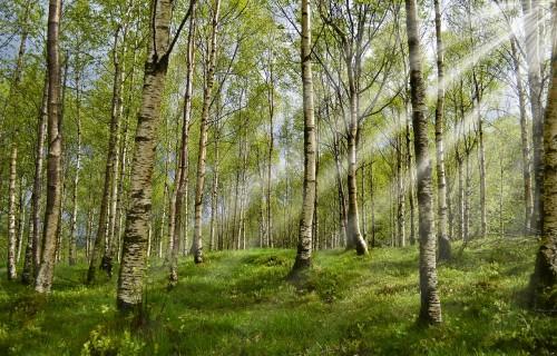 Mežsaimniekiem piedāvā seminārus par meža reproduktīvo materiālu, meža inventarizāciju un Āfrikas cūku mēri