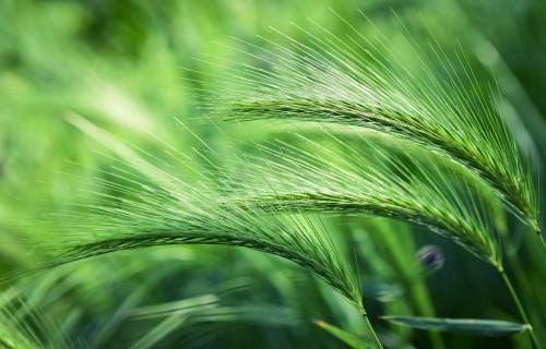 """Dibināta jauna lauksaimniecības biedrība """"Apvienība par ilgtspējīgu lauksaimniecību un lauku vidi"""""""