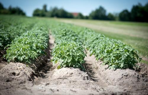 Bioloģiski apsaimniekotās lauksaimniecības zemes platības Latvijā pieaugs