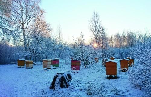 Ar Bites buču iziet pasaulē