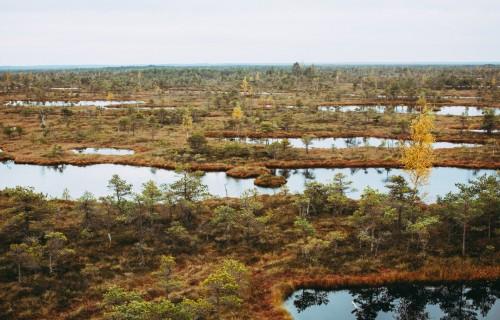 Latvijā ir sākta kūdraugsnes izplatības precizēšana lauka apstākļos