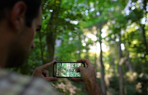 """Pasākumā """"Mežs ienāk Jelgavā"""" varēs atraktīvā veidā iepazīt meža nozares aktualitātes"""